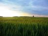 084_Pohled-na-Snezku-od-kastanove-aleje-u-Svobodneho